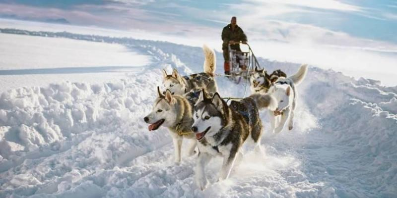 Husky-driving in Lapland. © Visit Lapland