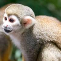 Animal Cruelty Audit Impacts Travel Industry