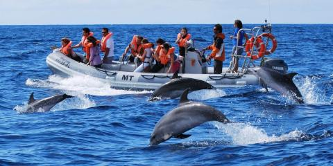 Spotting dolphins in the Azores.
