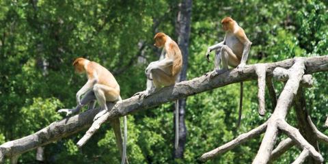 Borneo Family Adventure Holiday