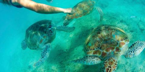 Sea turtles in Carlisle Bay, Barbados © Crystal Cove