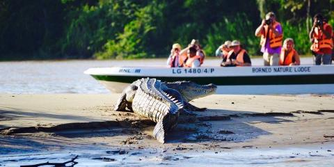Estuarine crocodile sighting on a boat trip with Borneo Nature Lodge, Malaysia.