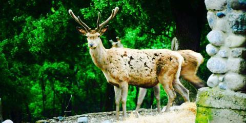 An inhabitant of Bourazani Wild Life Resort.