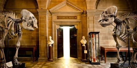 University of Edinburgh's Anatomy Museum