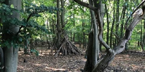An expertly-constructed den in Sherwood Forest.
