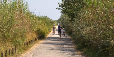 One of the 'Quiet Lanes of Mallorca' to explore.