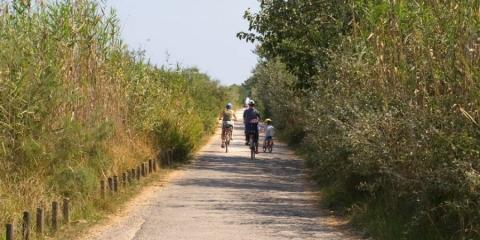 Family Cycling Holiday: Quiet Lanes of Mallorca.