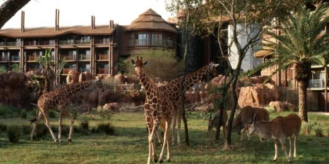 Rooms with a view at Disney's Animal Kingdom Lodge.