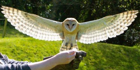 Owl at