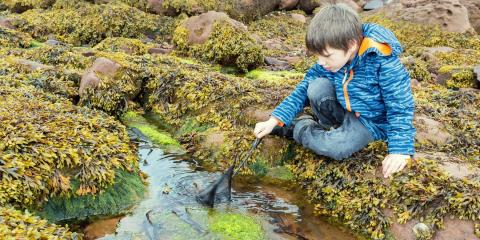 Rock-pooling at Millport Centre on the Isle of Cumbrae.