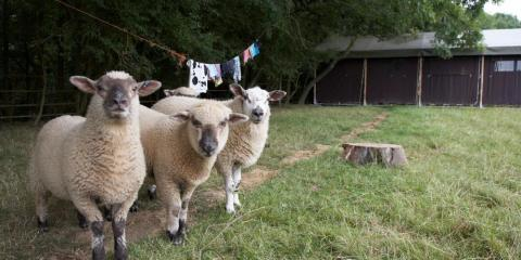Get up close to farm animals at Canfields Farm.