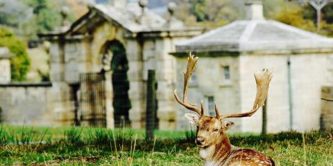 An inhabitant of the Swinton Park estate.